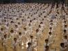 1000 personas demostrando Taichi